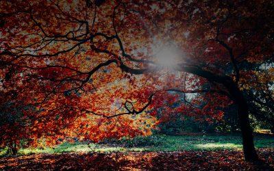 7 csodás hely őszi sétákra